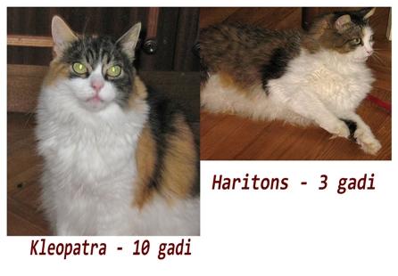 Kleopatra un Haritons