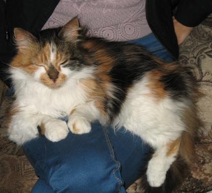 kaķi Līčos