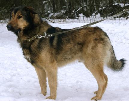suņi Līčos