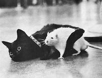 kaķisunžurka